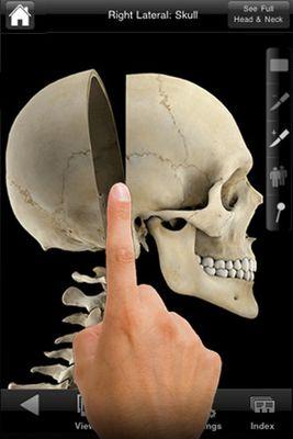 skeletal1.jpg