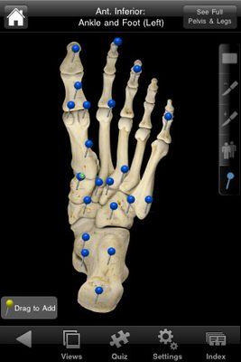 skeletal2.jpg