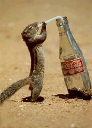 animal-cocacola.jpg
