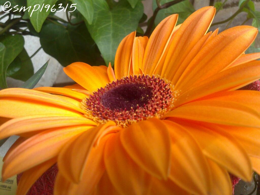 PicsArt_1370802045385.jpg
